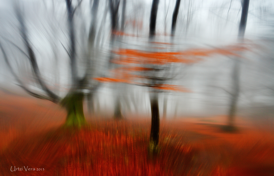 Dancing_forest