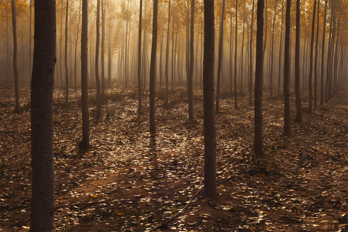 """""""Niebla en el Bosque"""""""